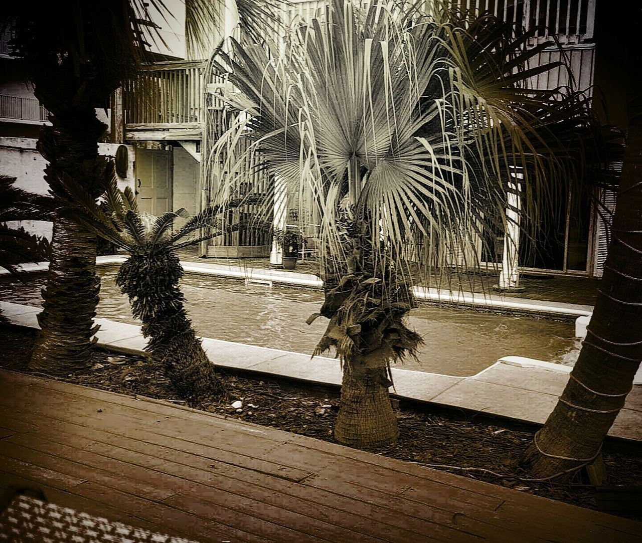 palm tree, tree, growth, water, architecture, night, swimming pool, outdoors, no people, nature