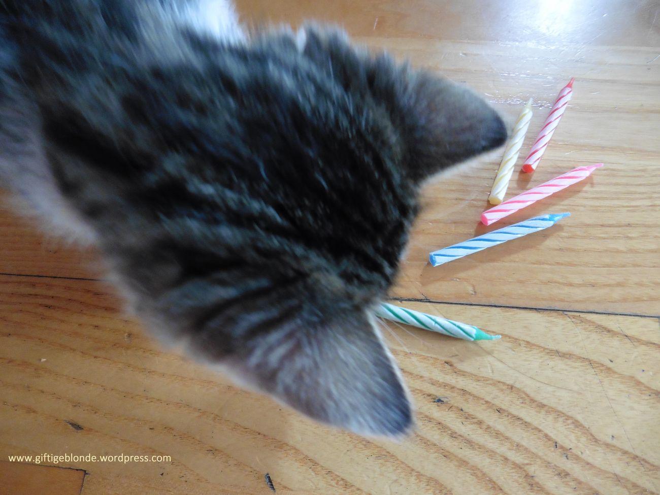 Babycat Cute Cutepets HappyBirthday Kitten Little Boy Nellie Pets