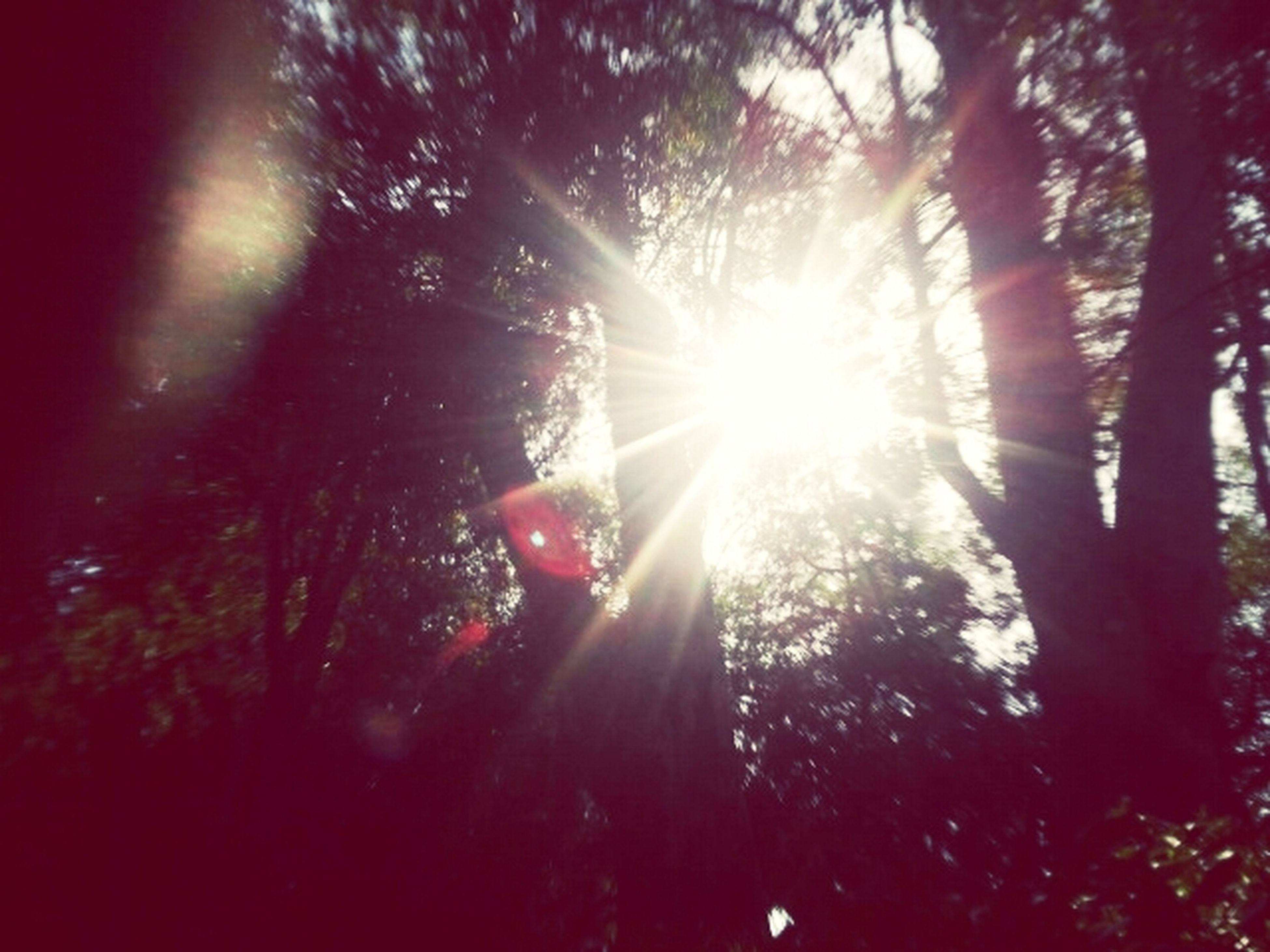 sun, sunbeam, tree, lens flare, sunlight, low angle view, growth, bright, tranquility, back lit, nature, beauty in nature, silhouette, streaming, sunny, branch, sky, tranquil scene, scenics, shiny
