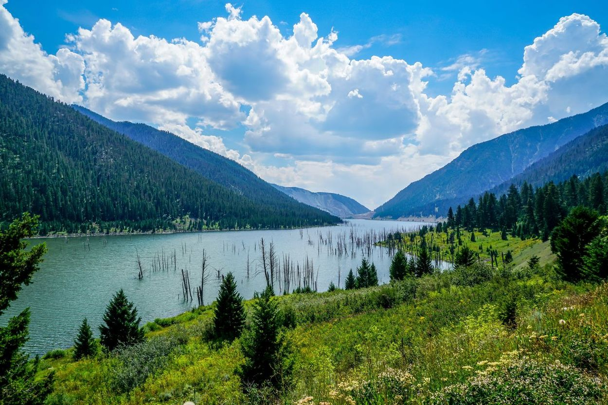 Earthquake lake was formed in 1959 when an earthquake hit the area and changed the landscape. Beauty In Nature Cloud - Sky Day Forest Grass Green Color Growth Lake Landscape Mountain Mountain Range Nature No People Outdoors Scenics Sky Summer Tranquil Scene Tranquility Tree Water