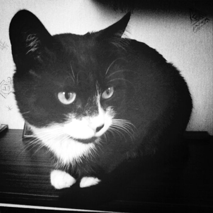 Cat Blackandwhite My Pet My Batman