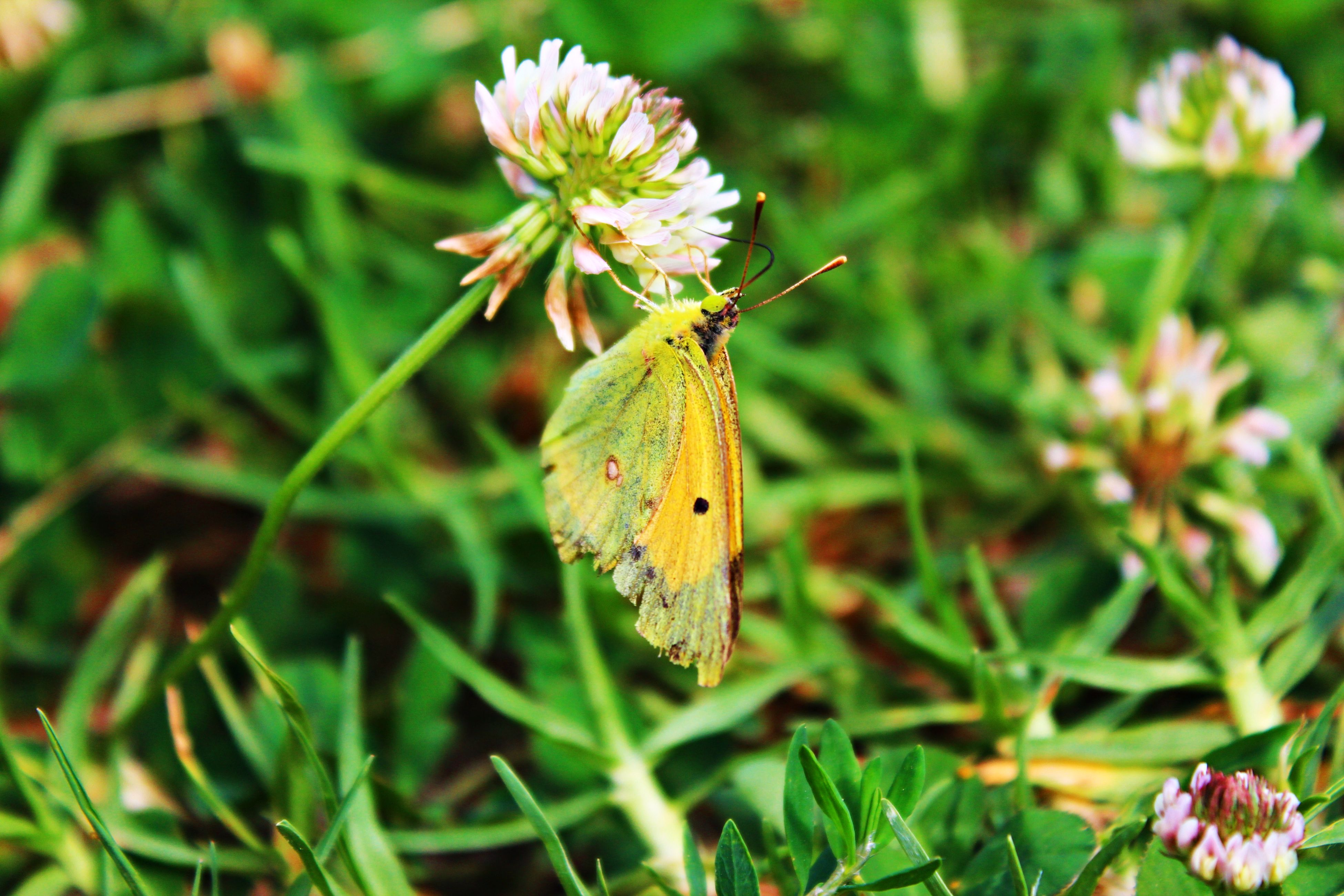insect, animals in the wild, flower, one animal, wildlife, animal themes, growth, plant, butterfly - insect, focus on foreground, fragility, butterfly, close-up, nature, beauty in nature, freshness, green color, leaf, day, outdoors