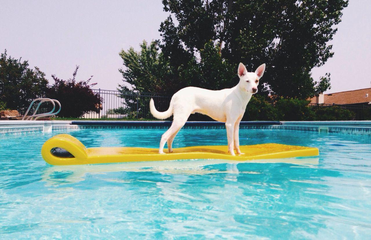 Summer fun Dog Pool Spud The Dog