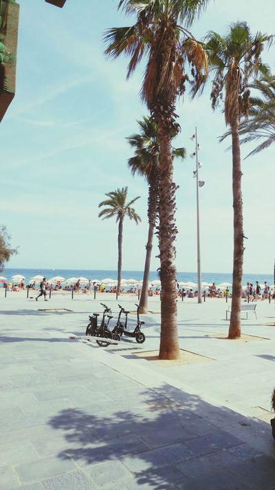 Barcelona2016 Barcelonetabeach