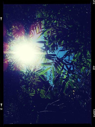 Chris Park SATX Alittle Patch Of Sun