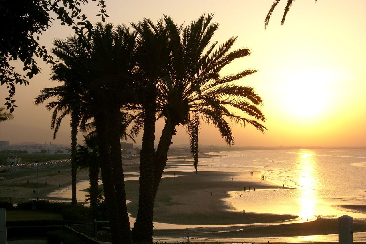 Beach, Sunset, Beauty In Nature Ebbe - Flut Idyllic Majestic Nature Oman_photo Palm Tree Reflection Scenics Sky Sun Tree Vacation Water Lanscape low tide, oman,