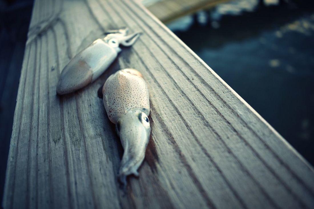 Bait Fishing Squid Rockport