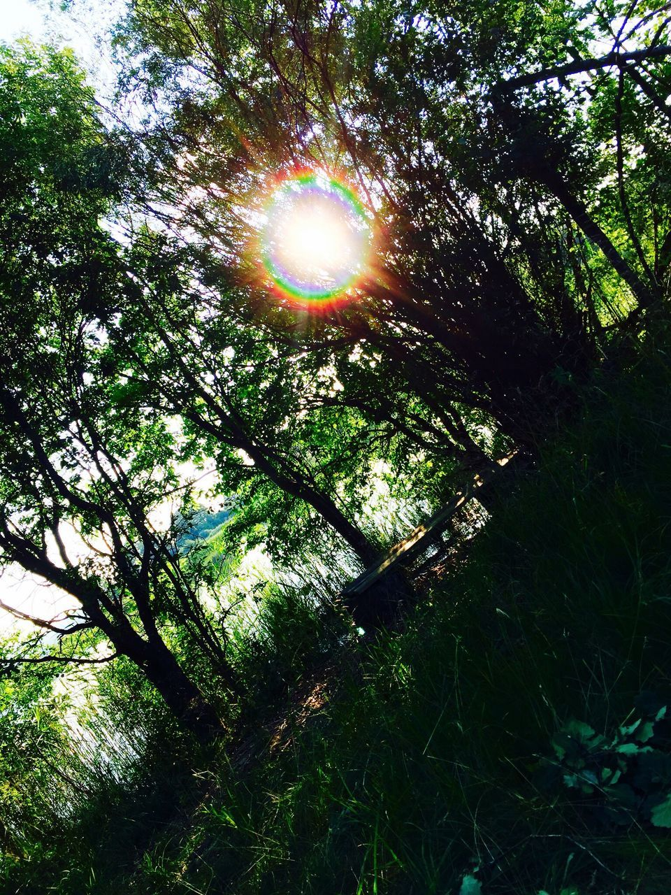 tree, nature, sun, beauty in nature, growth, low angle view, lens flare, sunbeam, tranquility, sunlight, tranquil scene, no people, green color, branch, scenics, outdoors, day, sky, refraction