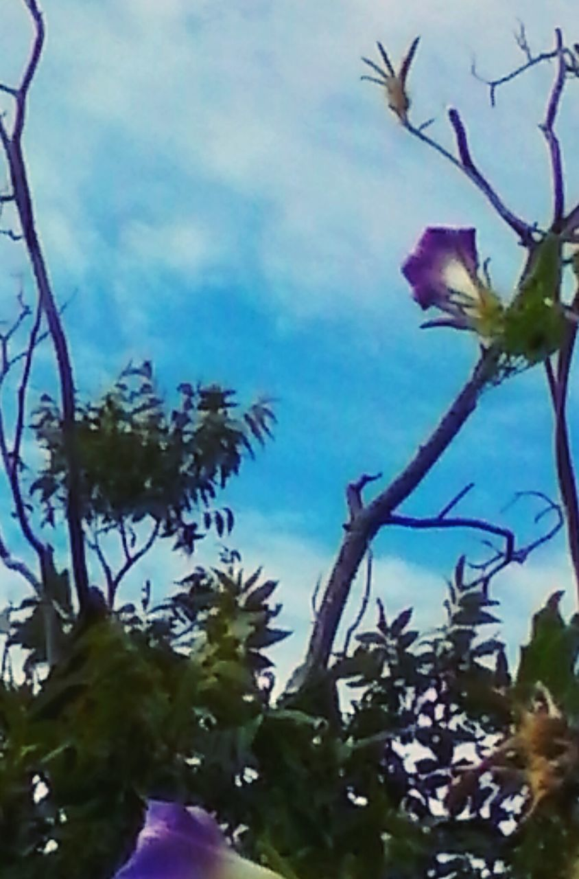 growth, tree, nature, flower, plant, fragility, no people, beauty in nature, branch, outdoors, day, close-up, blooming, freshness, sky, flower head