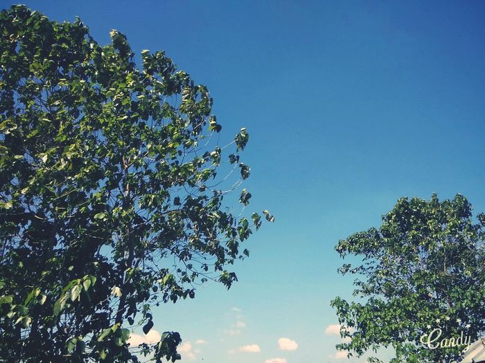 Today's Sky☁🍃🍁🎶 1:00pm Sunny Afternoon