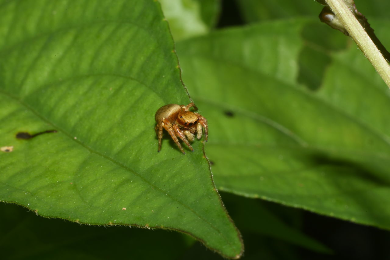 Animal Themes Animals In The Wild Beauty In Nature Close-up Macro Spider No People One Animal Outdoors Spider