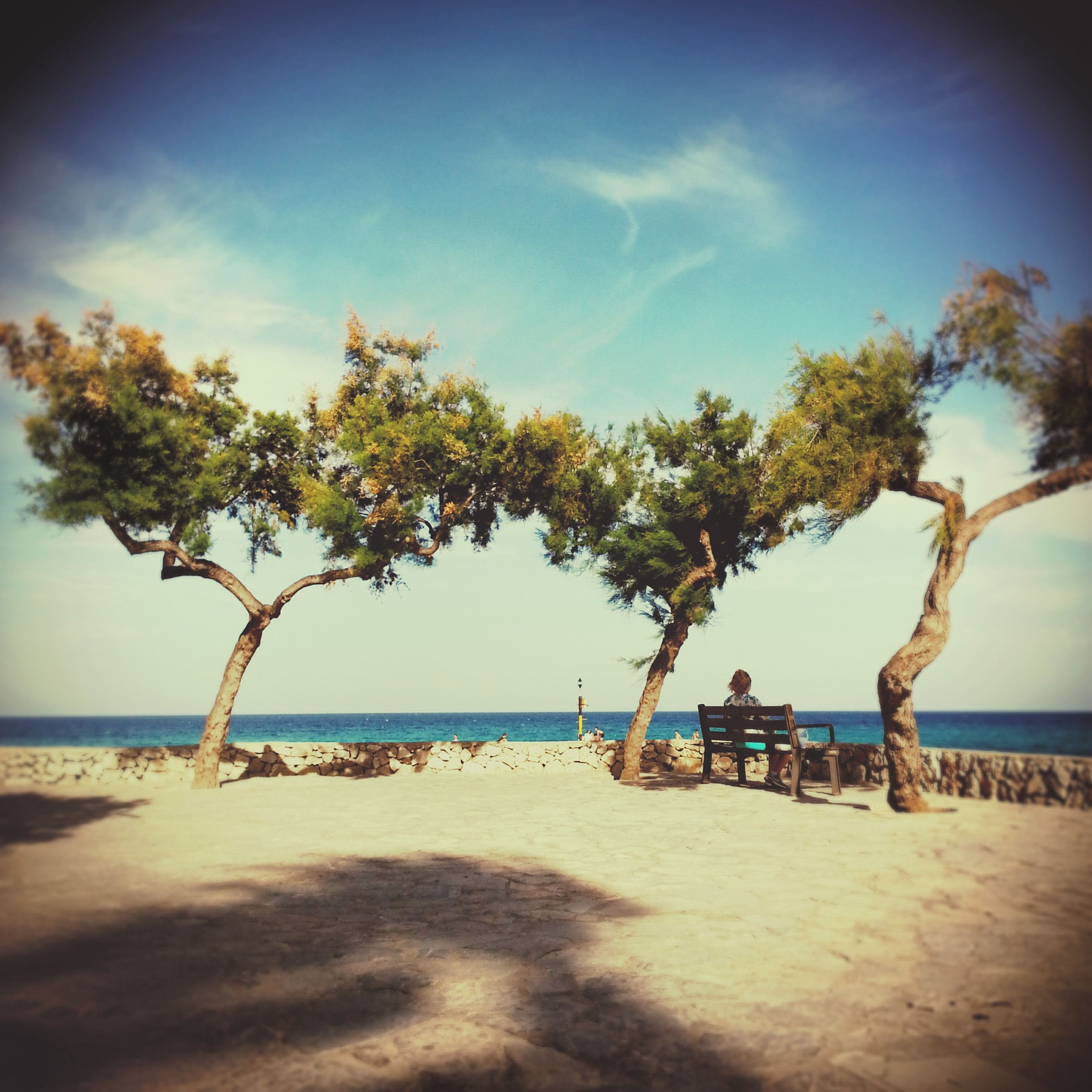 beach, sea, horizon over water, sand, shore, sky, water, tranquility, tree, tranquil scene, scenics, nature, beauty in nature, palm tree, vacations, sunlight, incidental people, shadow, idyllic, tree trunk