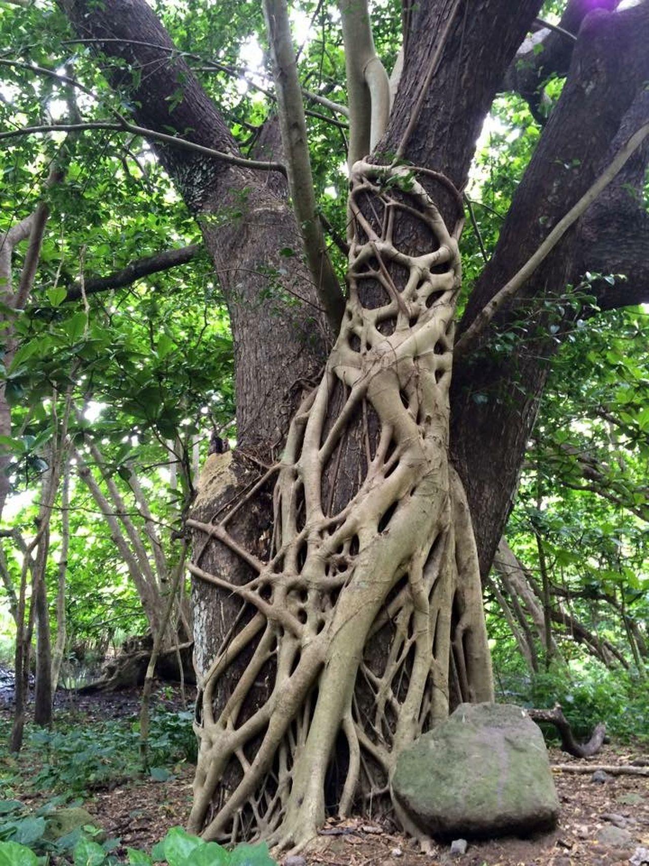 Waipiʻo Valley Big Island Beautiful Hawai'i  Hiking Nature May 2015