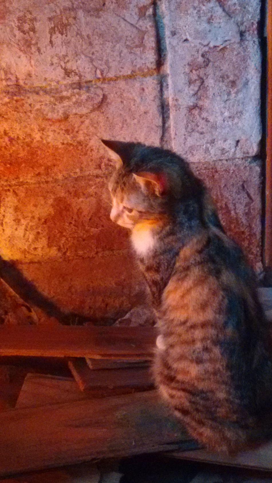 Calentitosencasa cats 🐱 Love ♥