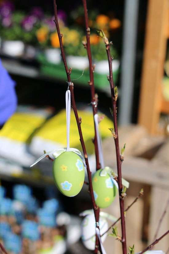 Easter Eggs Easter Eggs On Display Focus On Foreground Hanging Close-up Urban Exploration Decoration Hanging Easter Decoration Tree Branch 3XSPUnity