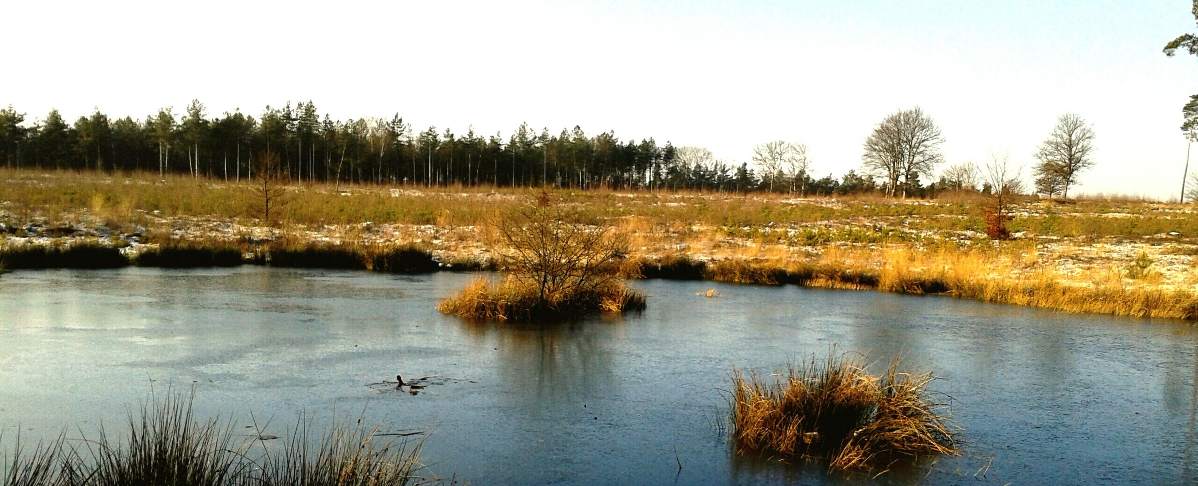 't Leesten Landscape Nature Veluwe Apeldoorn