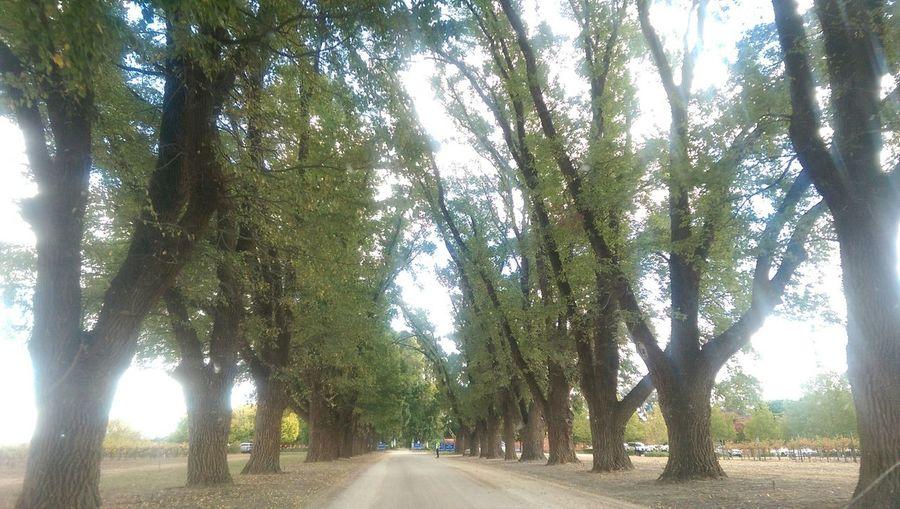 What lies ahead? Trees Avenue Sunlight Relaxing Exploring Nofilter#noedit Thegreatoutdoors2015EyeemAwards