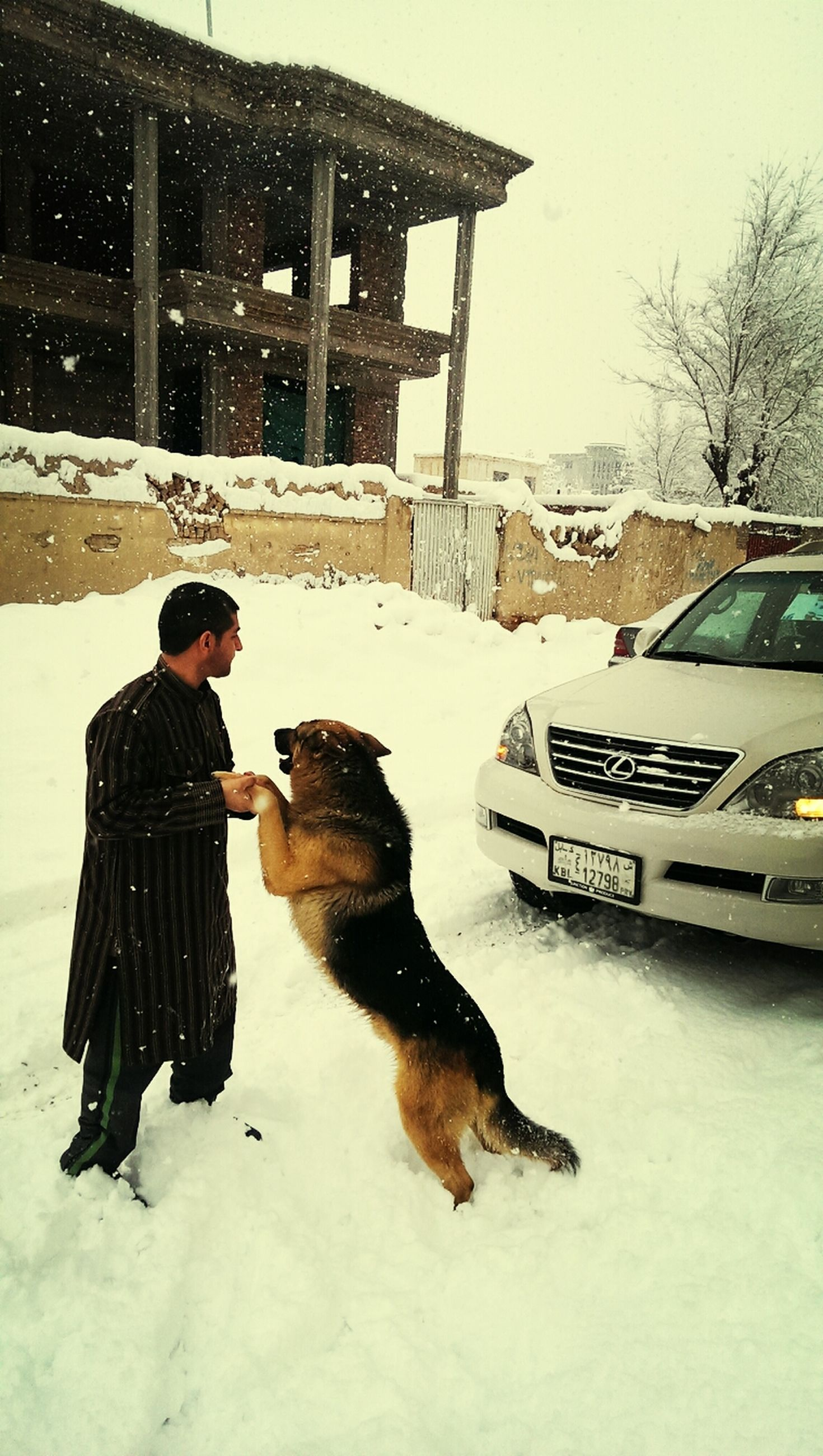 snow, winter, cold temperature, domestic animals, animal themes, architecture, building exterior, built structure, one animal, dog, full length, pets, season, lifestyles, mammal, standing, leisure activity, warm clothing
