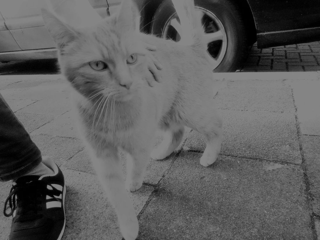 Comewithme Hello World Cool Look WatchMe Predator Cat Streetphotography Leadme OnOurWay Blackandwhite Eyes Are Soul Reflection Petting