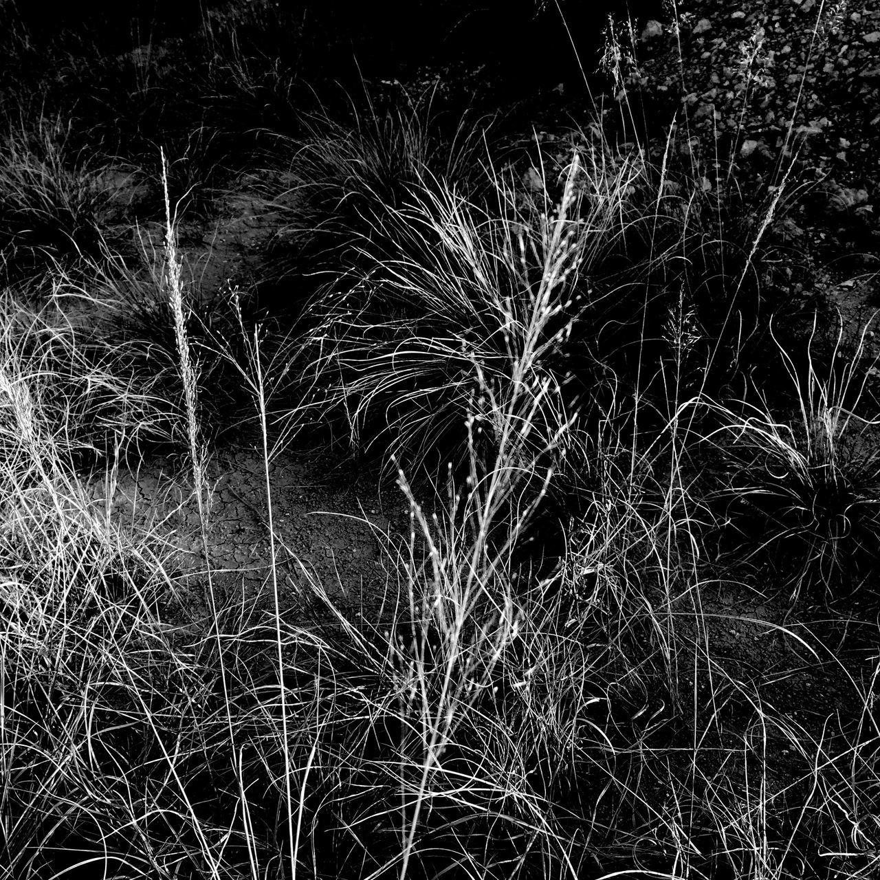 La tarde se despide Nature Beauty In Nature Plant EyeEm Best Shots - Black + White EyeEm Best Shots Beauty In Nature