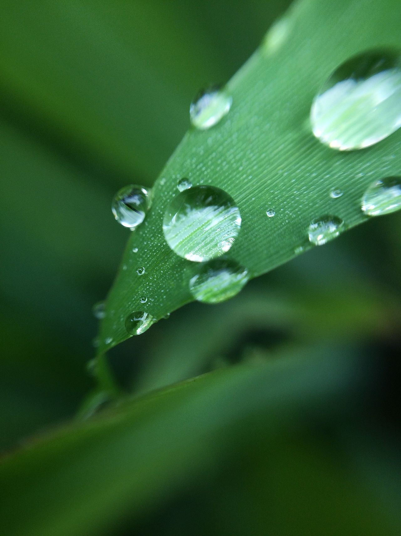 Close to nature Drop Wet Water Leaf Macro Green Color No People Beauty In Nature Outdoors Indonesia_allshots Nature Nature_collection Lombok