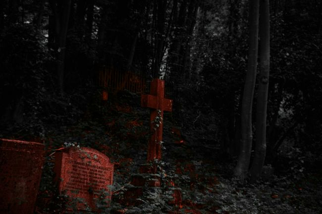Black And White With A Splash Of Colour Carmine Filter Nature On Your Doorstep Relaxing Taking Photos Nature Walking Around The Cemetery Bristol Uk Heavy Edit