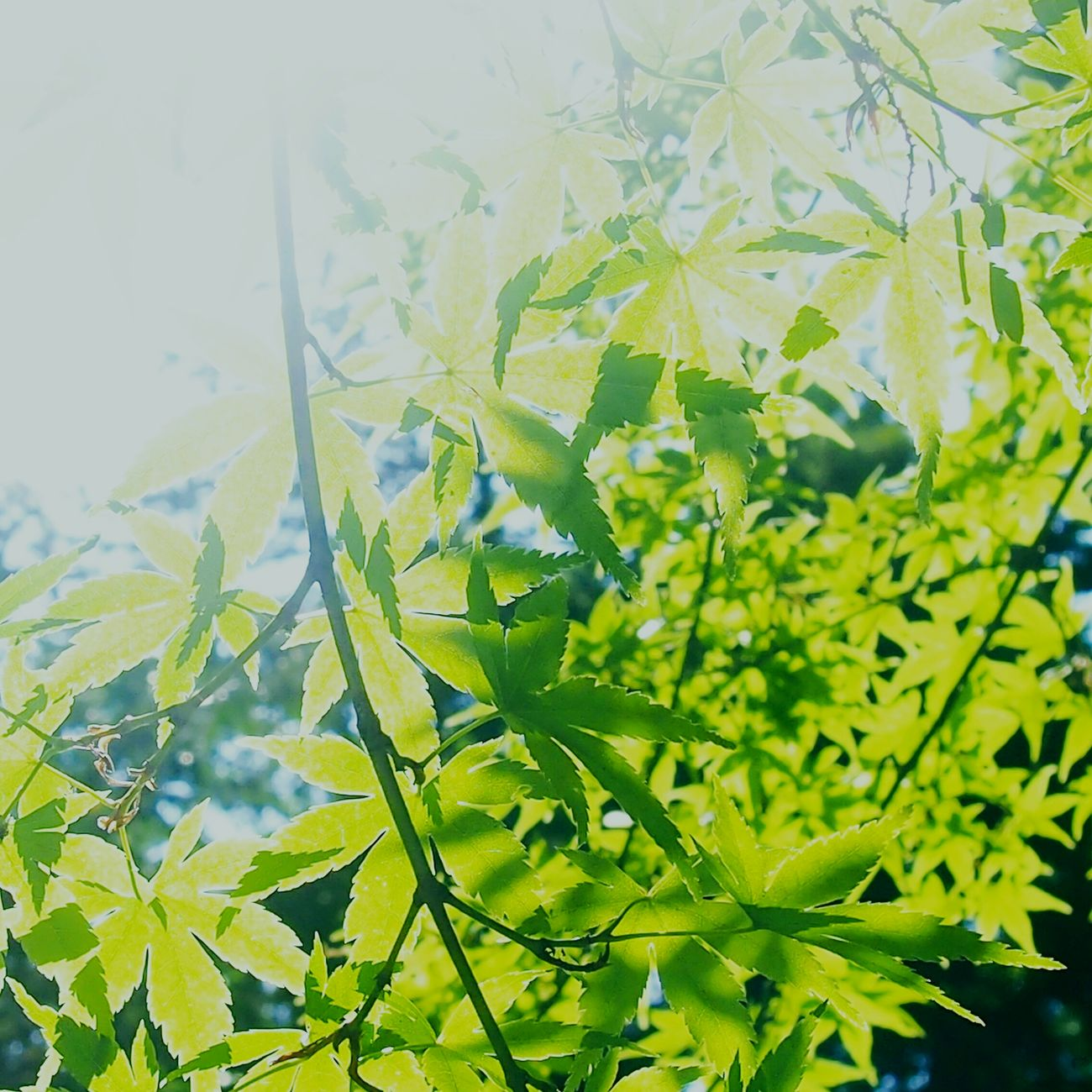 green Enjoying The Sun Green Nature Enjoying Nature
