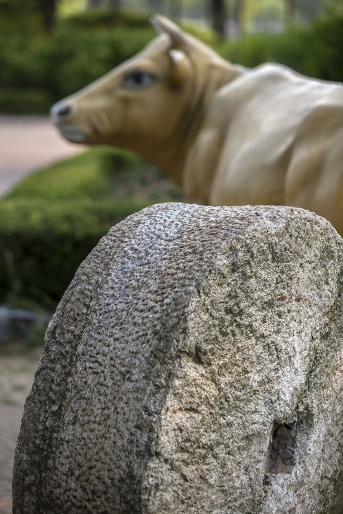 Animal Animal Body Part Animal Hair Animal Head  Animal Nose Brown Bucheon Lake Park Bull Close-up Day Focus On Foreground Herbivorous Mammal Millstone Nature No People Outdoors Park Part Of Rural Landscape Selective Focus Snout Statue