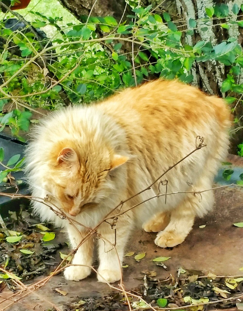 domestic cat, animal themes, one animal, mammal, domestic animals, feline, cat, pets, no people, day, outdoors, field, sitting, grass, nature