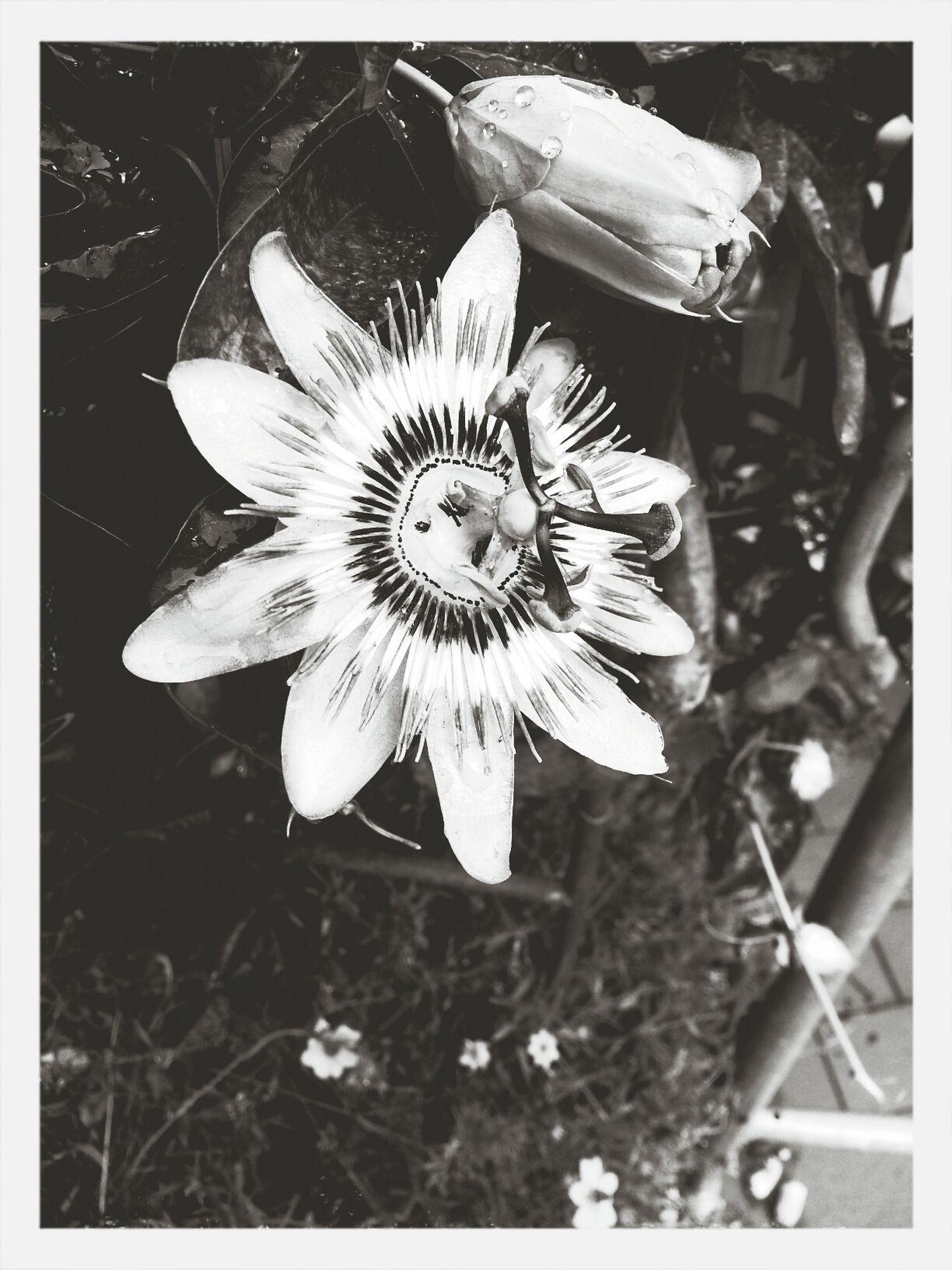 flower *.*