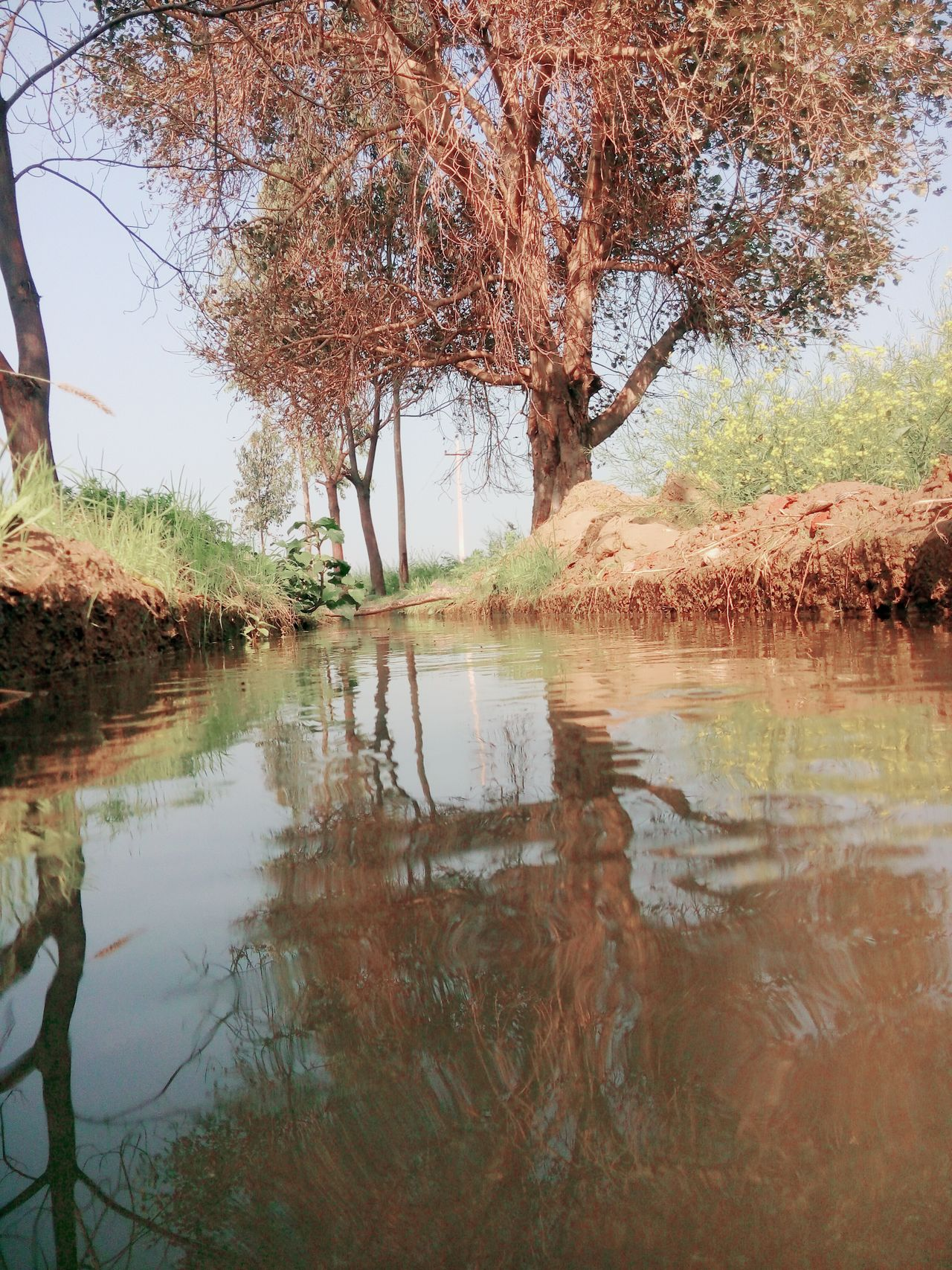 Peepal Tree Water Projection Farming Drain Local Photoshoot Water Reflections