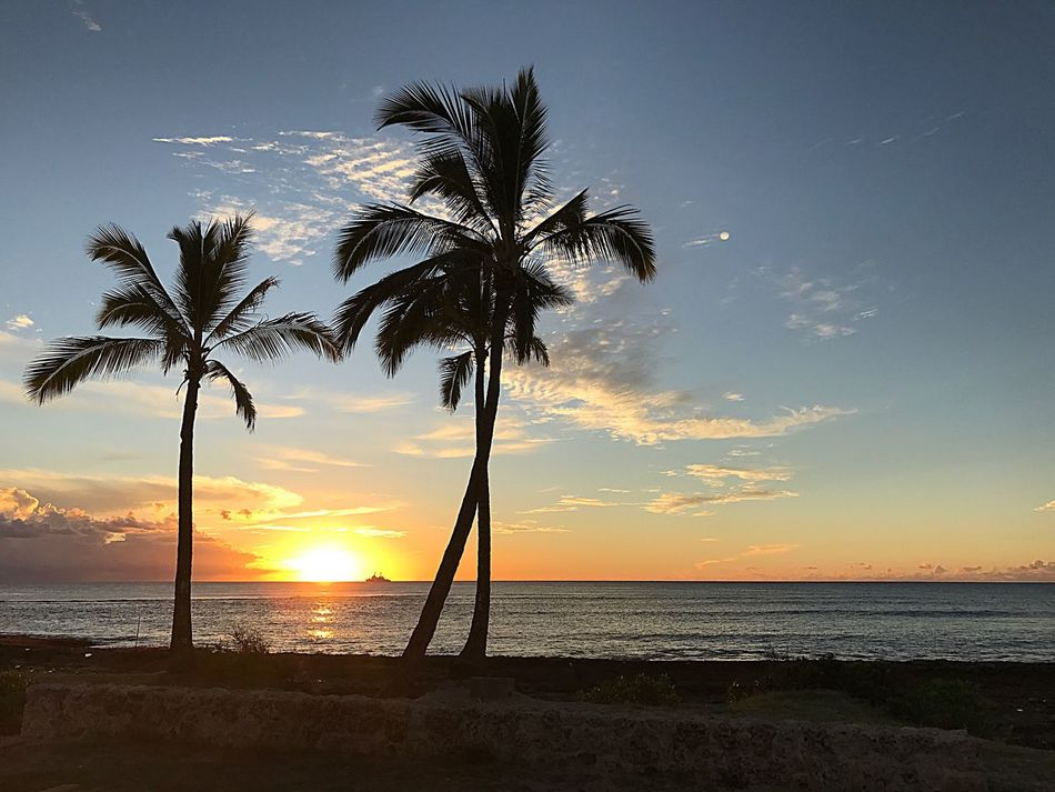 Sea Beach Sunset Horizon Over Water Beauty In Nature Scenics Water Palm Tree Tranquility Nature Sky Tranquil Scene Tree Sun Shore Silhouette Idyllic Cloud - Sky No People Tree Trunk Orange Color IPhone Photography In Oahu United States