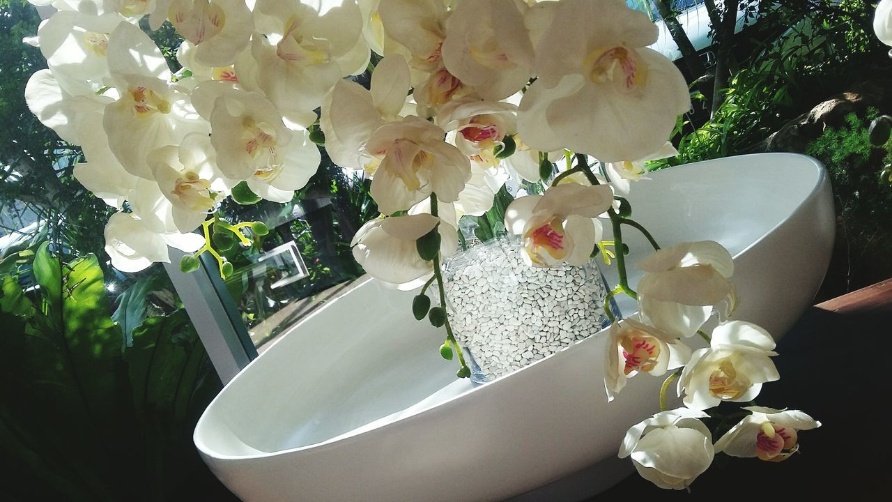 Beautiful stock photos of orchid, Beauty In Nature, Container, Day, Flower