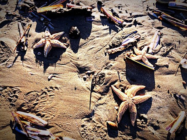 Dutch Coast Sea Fish Holland Beatiful Iphonephotography Sand Starfish