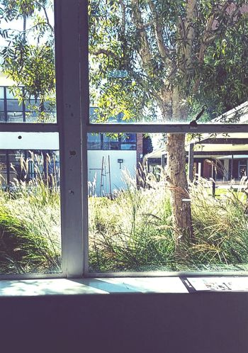 Window Tree Built Structure Indoors  Sunlight CSULB Day Green Color