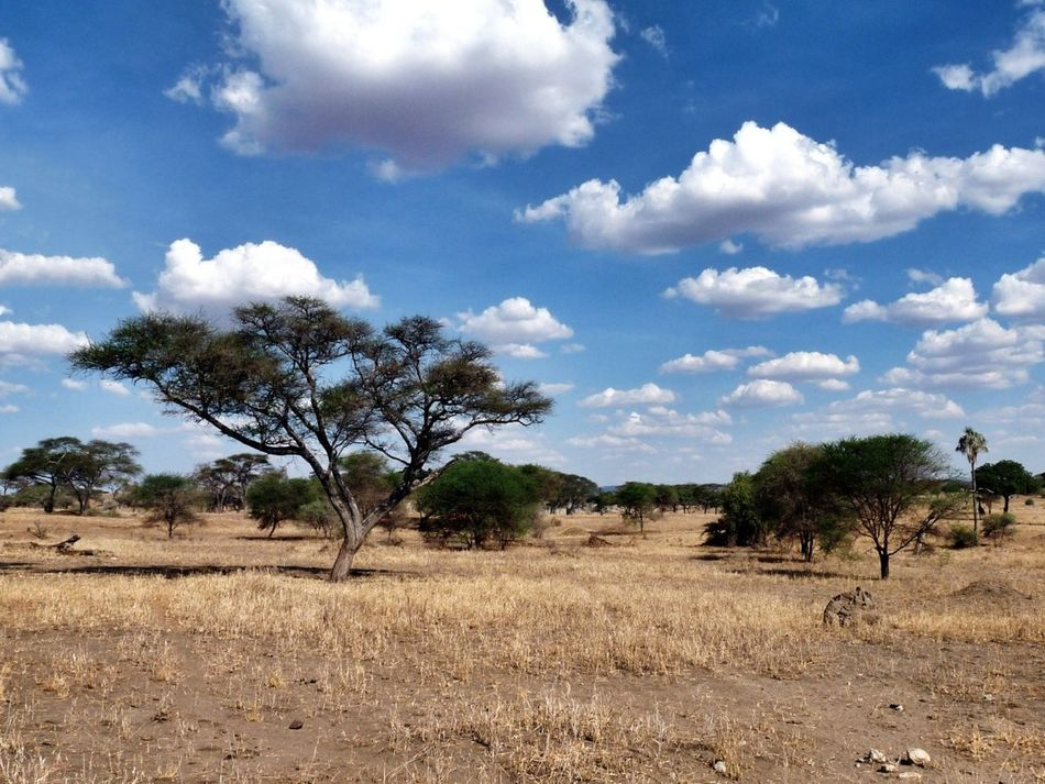 Fascinating african landscape (Tanzania) Traveling Landscape Taking Photos Travel Africa EyeEm Nature Lover The Great Outdoors With Adobe
