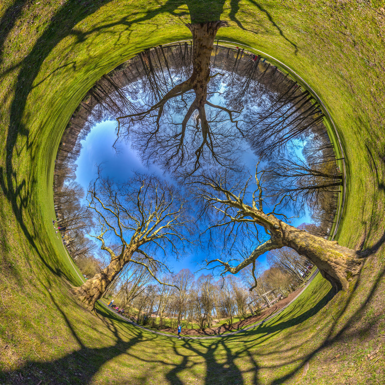 TREEOLOGY turned inside outside 360° Bare Tree Beauty In Nature Blue Sky Branch Branches Day Grass Growth Growth Kaiserslautern Landscape Light And Shadow Little Planet Nature Outdoors Panorama Park Shadows Sky Spherical Panorama Stems Switched Tiny Planet Volkspark