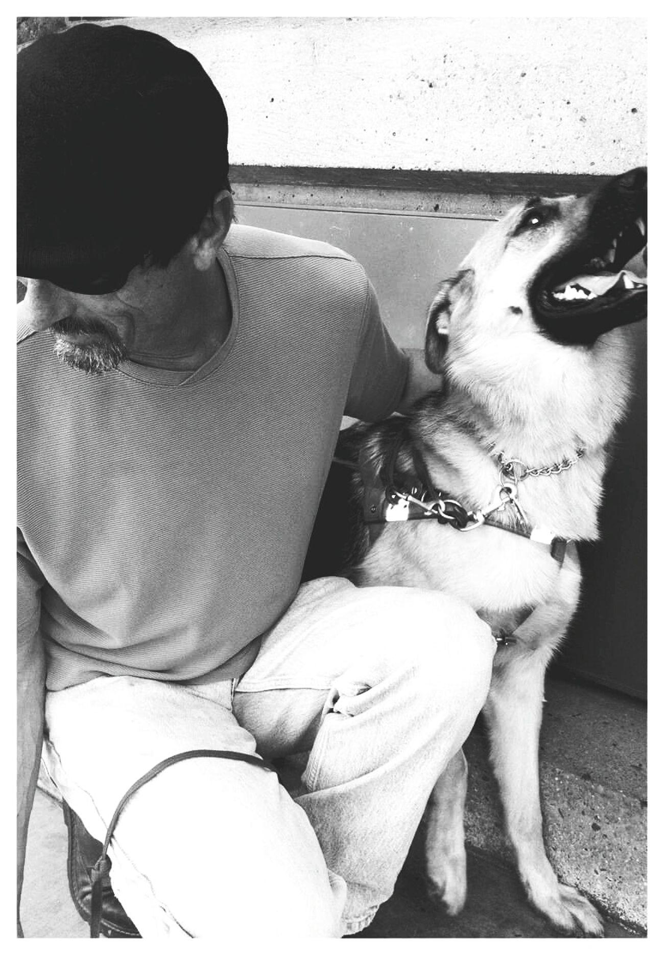 Beauty Redefined Blindfaith Watchdog German Shepherd