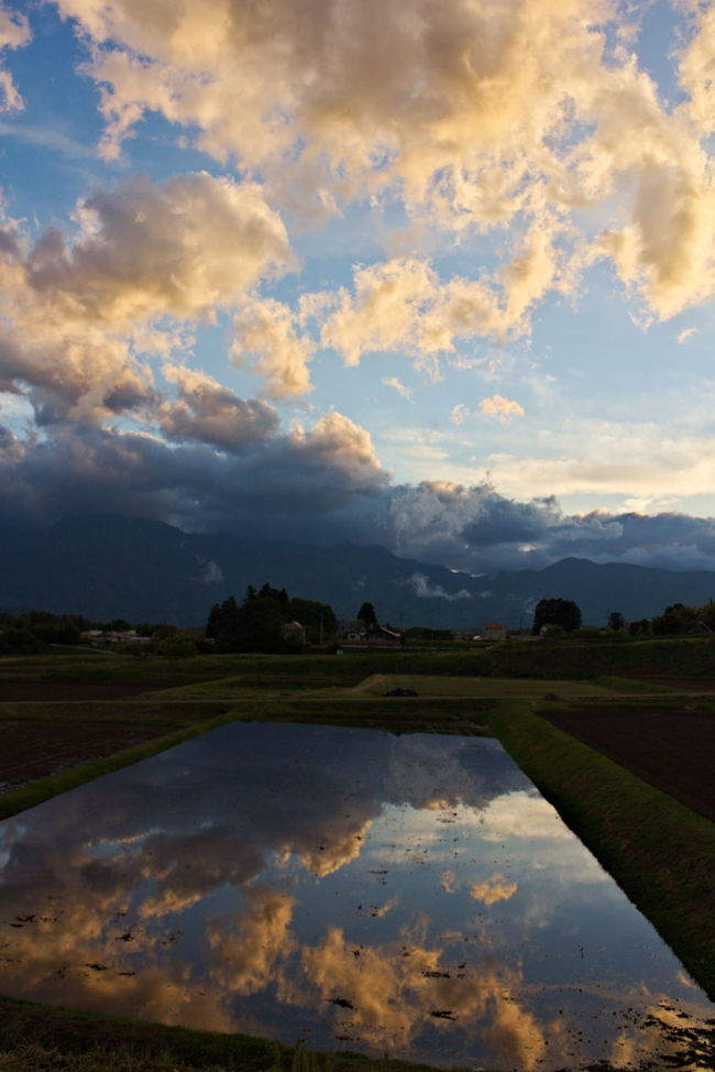 beautiful sunset. reflection on rice fields. Beauty In Nature Cloud Cloud - Sky Cloudy Horizon Over Land Landscape Nature No People Non Urban Scene Non-urban Scene Outdoors Reflection Reflection Reflections Reflections In The Water Rural Scene Scenics Sky Sunset Tranquil Scene Tranquility Water Weather 反射 夕焼け