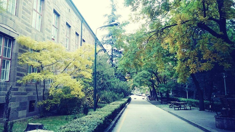 Ankara University Tandogan Ankara Turkey University Campus Green Trees