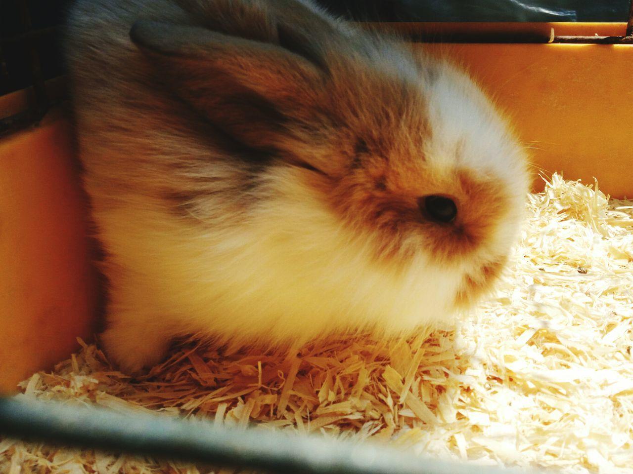 Rabbit ❤️ кролик Lapin