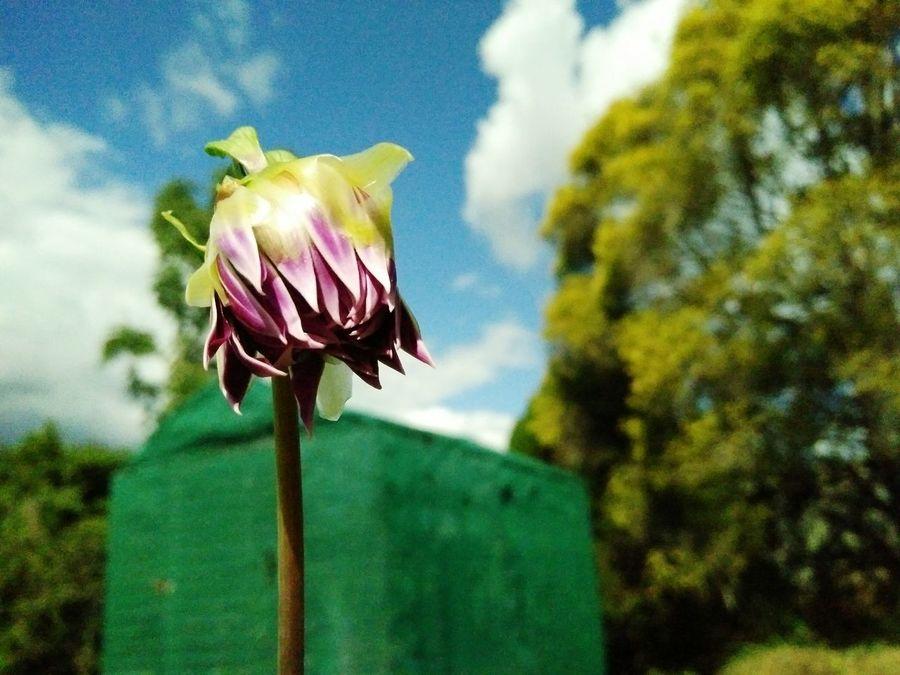 Flower Petal Flower Head Beauty In Nature Close-up Nature Blossom Springtime AdamTurnerPhotography