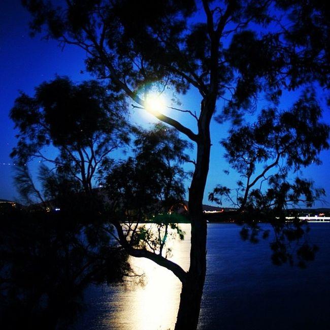 Full moon hiding behind a tree