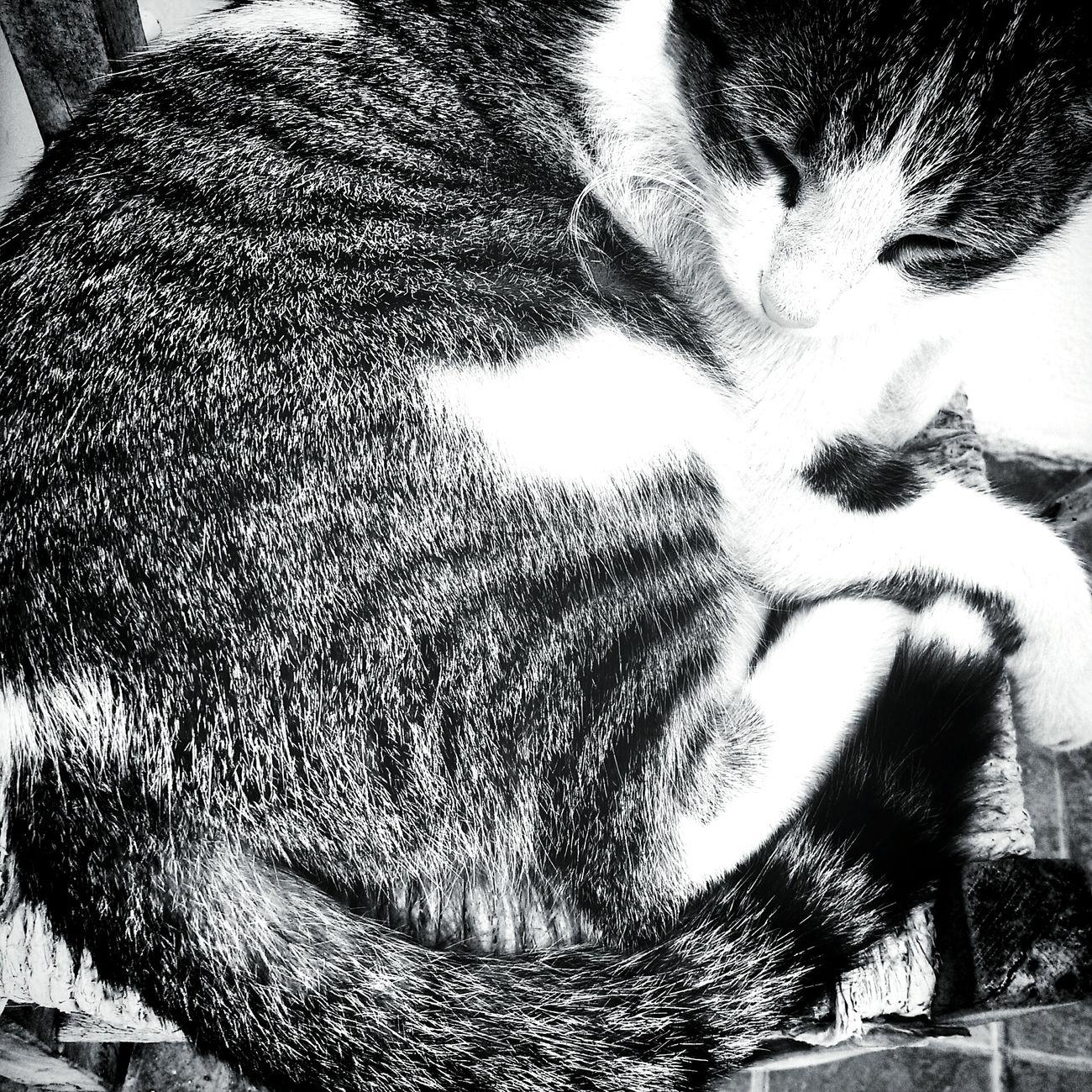 Catoftheday Cat Lovers Cute Cats Ilovemycat