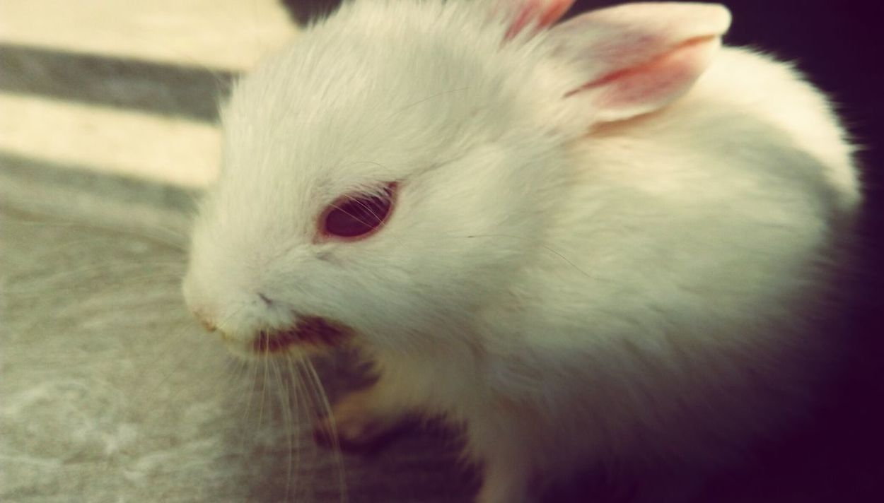 Pets Rabbit ❤️ Love One Animal Close-up Sweet♡ Cute Pets Cute♡ Bunny 🐰 Friend!❤ Friends ❤ White Color Outdoors Nature Day Beautiful Pet Lover . Killing Me To My Friend vaylyn Pet Portraits