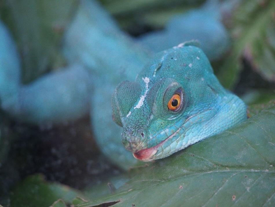 Beautiful stock photos of snakes, Animal Body Part, Animal Head, Animal Themes, Animal Wildlife