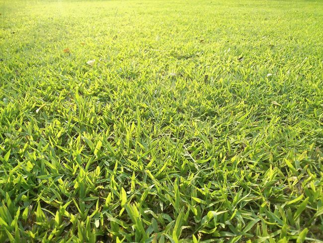 Green Lawn Yard Sony Xperia SP