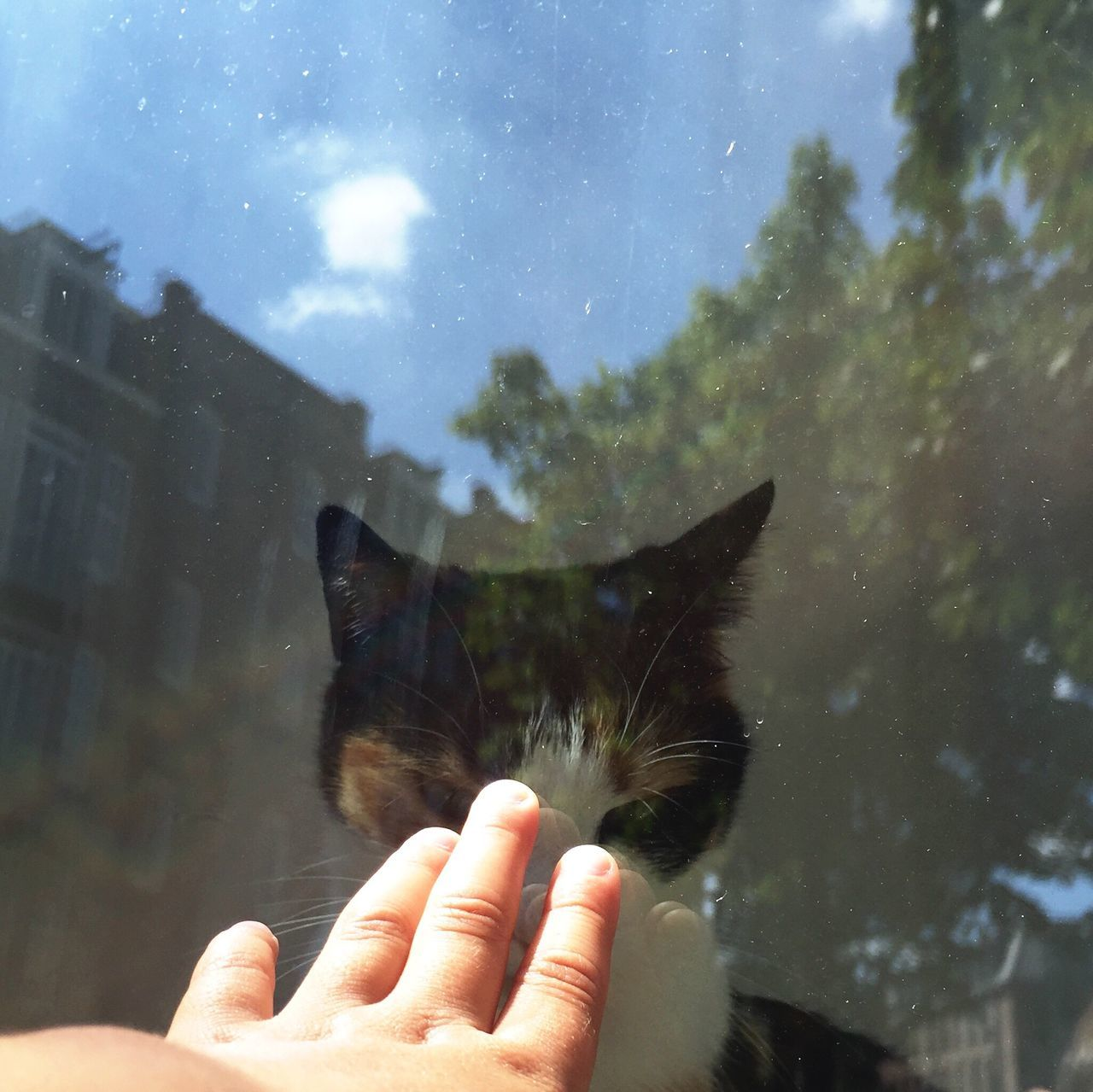 Close-Up Of Person Touching Glass Against Cat