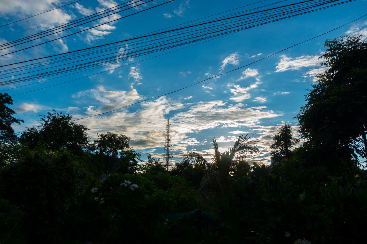 Beauty In Nature Blue Cable Cloud - Sky Connection Day Electricity  Electricity Pylon Growth Low Angle View Nature No People Outdoors Power Line  Power Supply Silhouette Sky Technology Telephone Line Tree