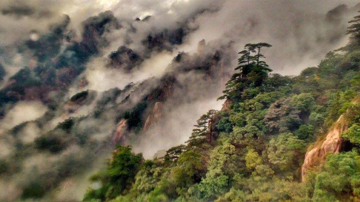 Mountain Nature Tree Landscape Outdoors Forest Tranquility No People Travel Cloud - Sky Day Beauty In Nature Scenics Mountain Range Fog Sky Yellow Mountains China